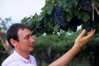 Adrian Barberis inspects grapes at his vineyard in Argentina´s Mendoza province in February 2005.  (Larry Luxner)