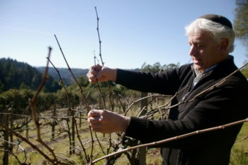 Winemaker and vintner Benyamin Cantz inspecting his vineyards in Santa Cruz, Calif., January 2013.  (Chavie Lieber/JTA)