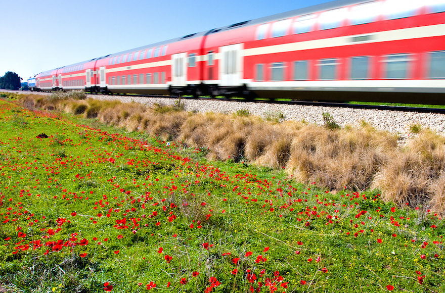 Israeli train passing through an anemone flower field. (Shutterstock/JTA)