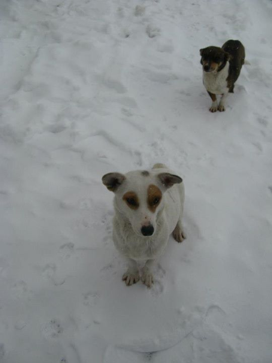 Two stray dogs the author became acquainted with in rural Ukraine, 2012. (Talia Lavin)