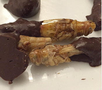 Chocolate-covered locusts from the dinner. (YeahThat'sKosher/Instagram)