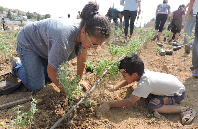Nearly 100 volunteers, most of them in their 20s, helped plant gardens and pave a road in the Palestinian villages of the South Hebron Hills. (Ben Sales)