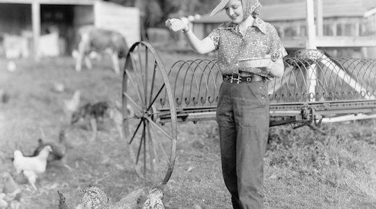 The Utopian Jewish Chicken Farmers of Petaluma, CA