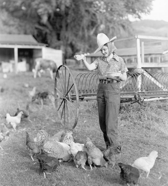 The Utopian Jewish Chicken Farmers of Petaluma, CA
