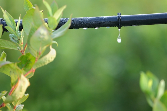 The Jew Who Invented Drip Irrigation