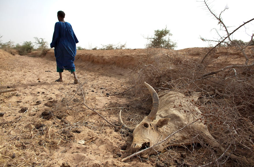 A herder outside Dikka village, in the Matam region of northeastern Senegal during a drought in 2012. (Rebecca Blackwell/AP Images)