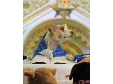 Beverly Hills: Home of the Bark Mitzvah Since 1958