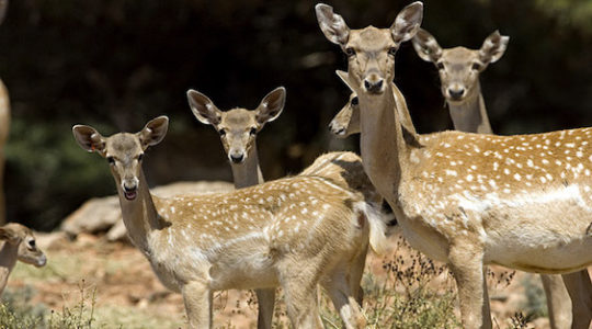 Israel's Persian Deer Heist of 1978