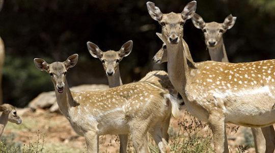 Israel's Persian Deer Heist of 1978