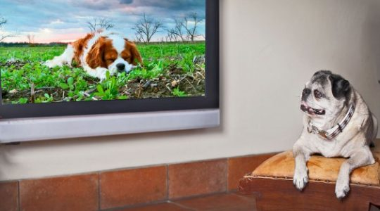 Israel's Weirdest Innovation is this TV Station for your Dog