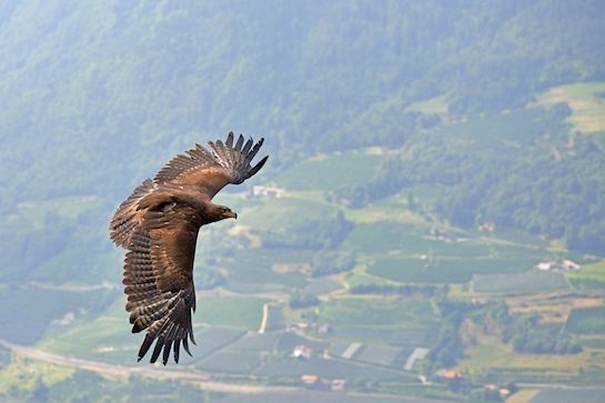 These Three Eagles Left Israel to Go Date in Europe