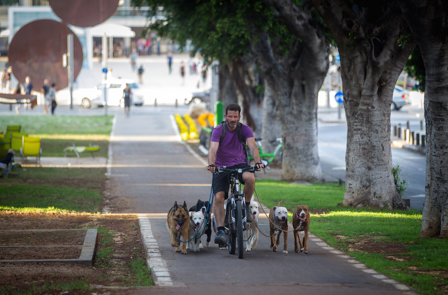 A dog walker plying his trade on a bicycle in central Tel Aviv, June 18, 2015. (Miriam Alster/Flash90)