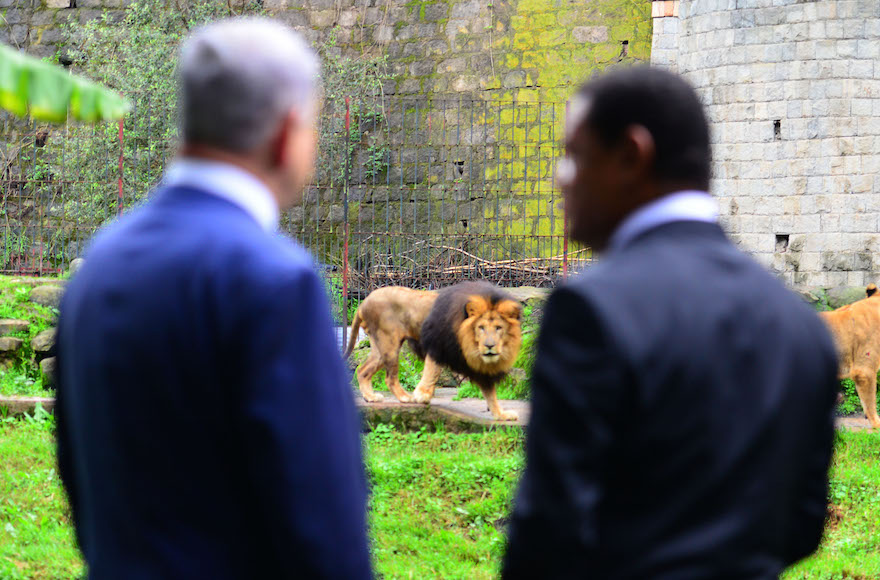 Israeli Prime Minister Benjamin Netanyahu, left, and Ethiopian President Mulatu Teshome watching lions at the presidential compound in Addis Ababa, Ethiopia, July 7, 2016. (Kobi Gideon/GPO)
