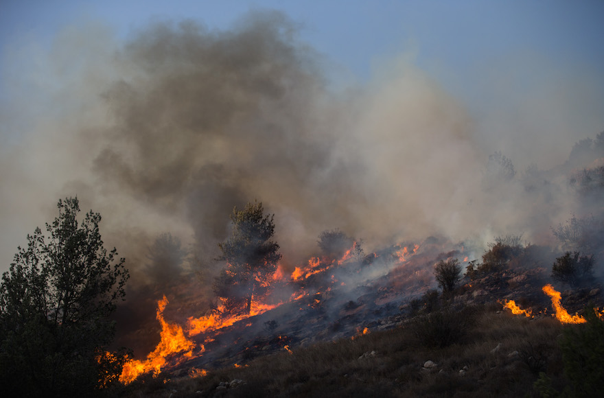 Fire fighters trying to extinguish a forest fire that broke out in the forest near the Nataf nature reserve, outside Jerusalem, Nov. 23, 2016. (Yonatan Sindel/Flash90)