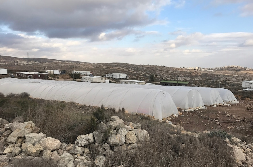 Greenhouses providing shelter to the hundreds of young people who have come to protest in Amona, the West Bank, Dec. 13, 2016. (Andrew Tobin)
