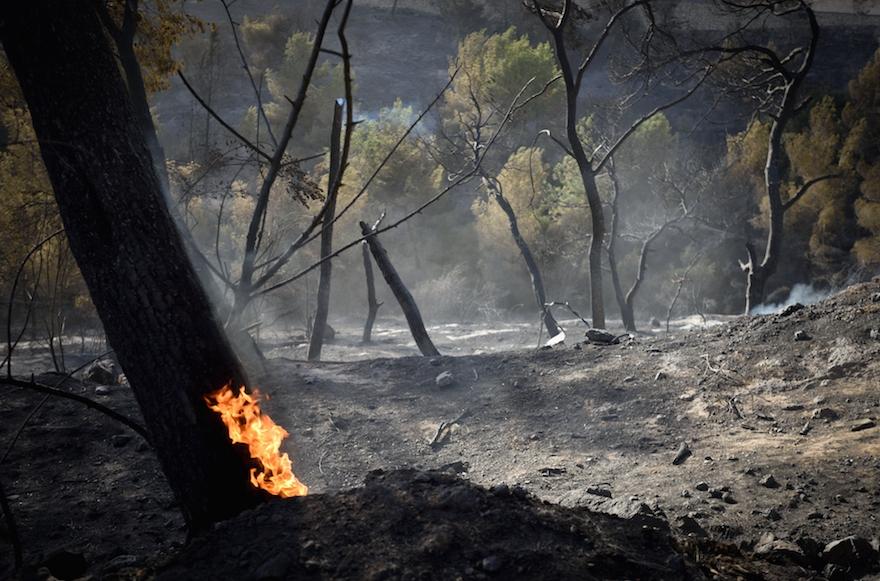 Trees aflame in the northern Israeli city of Haifa, Nov. 25, 2016. (Gili Yaari /Flash90)