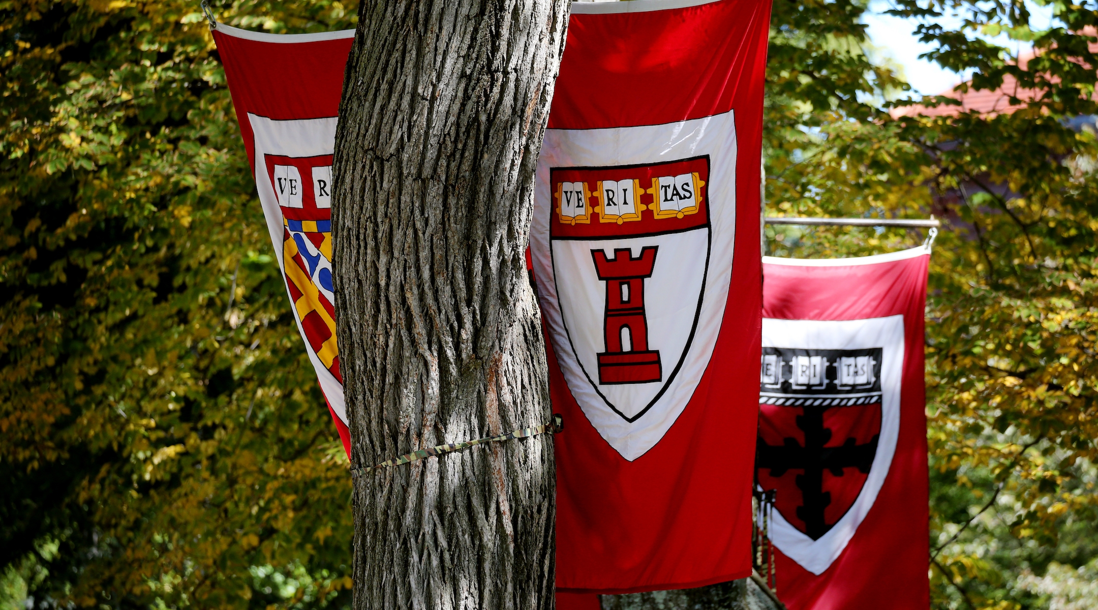 Harvard dropped a Jewish pro-gun Parkland student over past racist comments. Was it justifed?