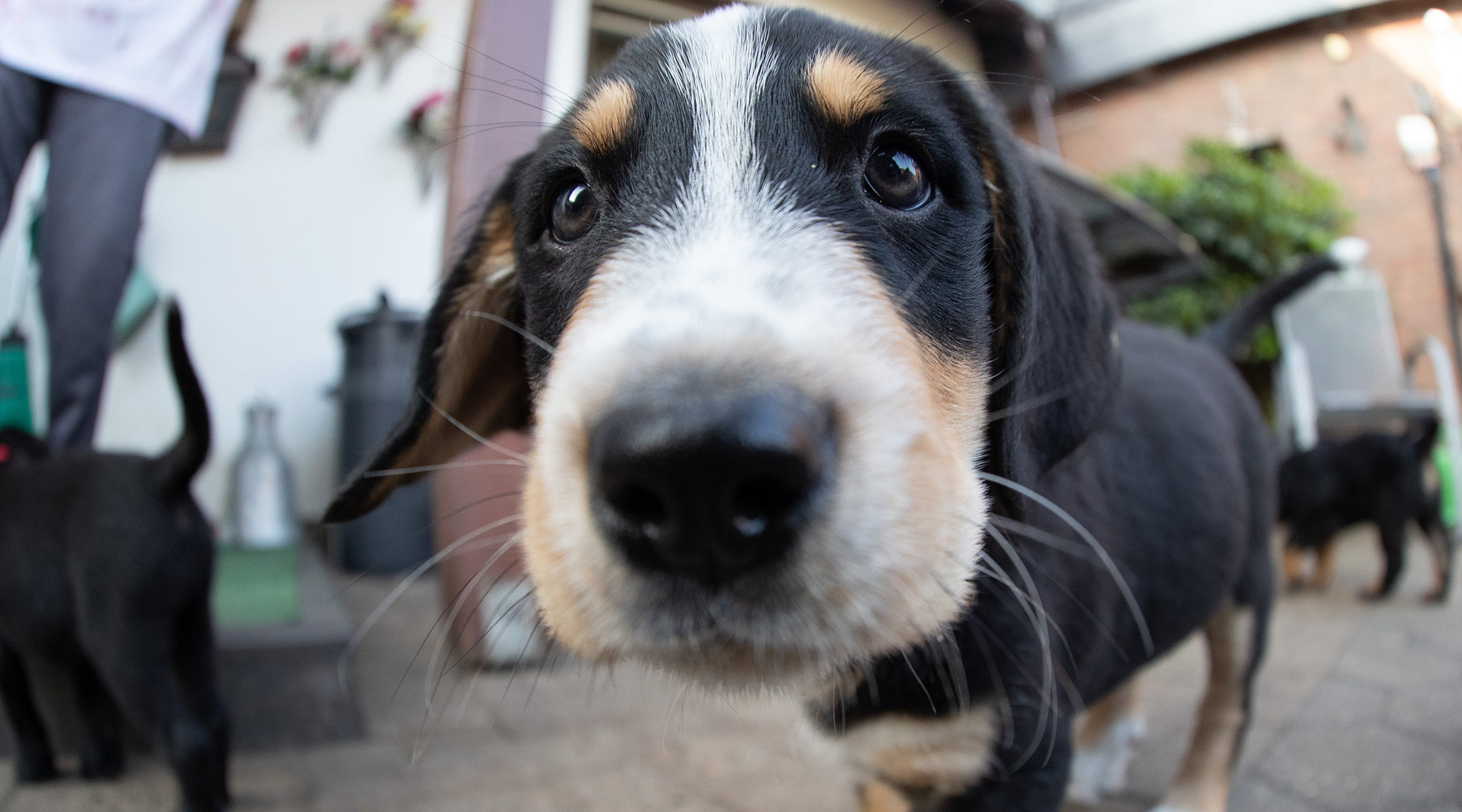 A puppy dog looks into the camera in Germany, July 12, 2019. (Friso Gentsch/picture alliance via Getty Images)