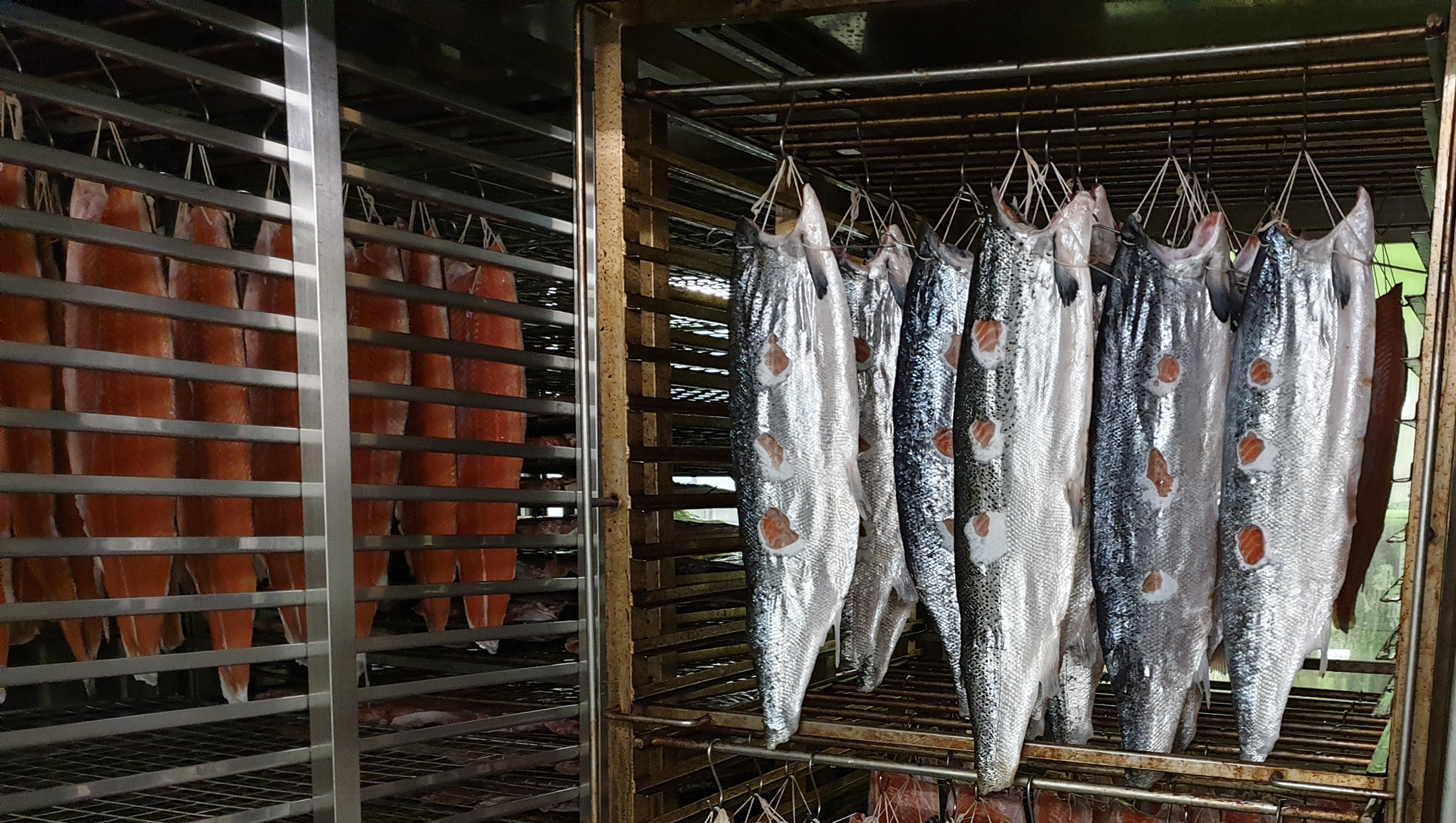 Salmon fillets being dried in a kiln ahead of smoking at Lance Forman's H. Forman & Son fish factory in the East End of London, the United Kingdom on Sept. 4, 2019 (Cnaan Liphshiz)