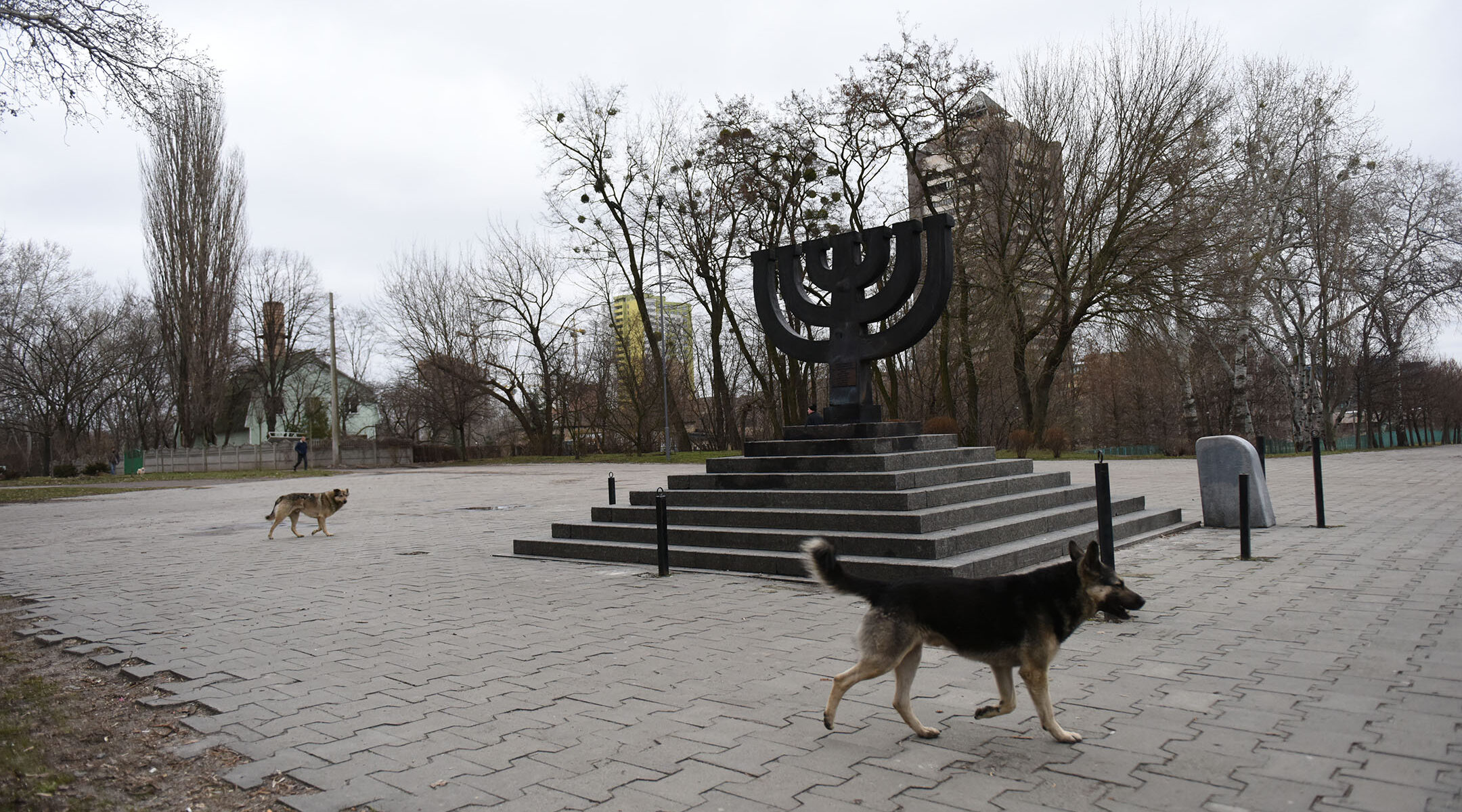 Stray dogs roam the Babi Yar monument on March 14, 2016 in Kiev, where Nazis and local collaborators murdered 30,000 Jews in 1941. (Cnaan Liphshiz)