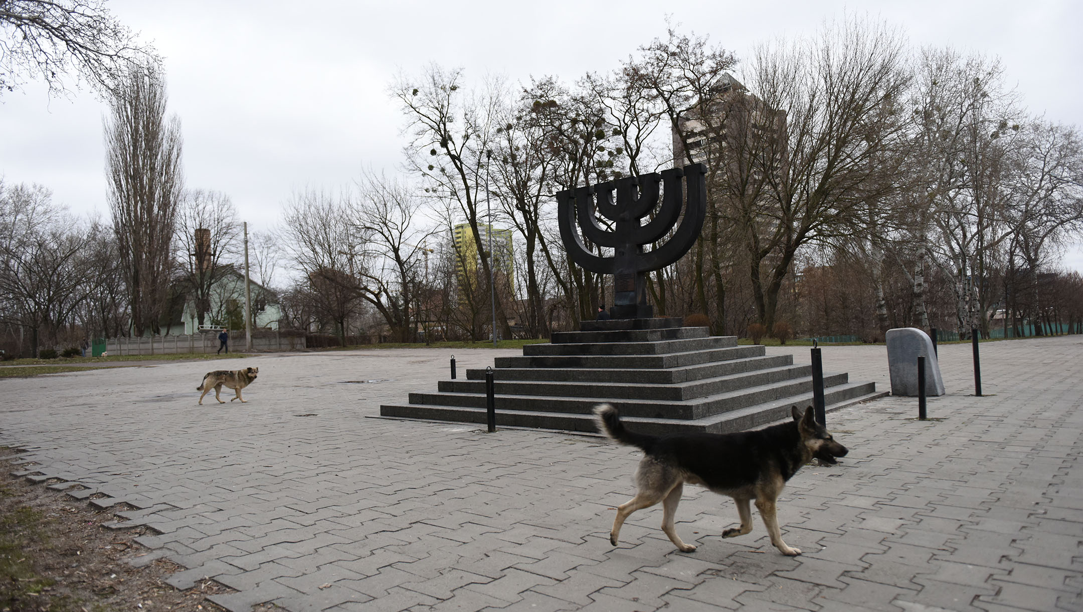Stray dogs roam the Babyn Yar monument on March 14, 2016 in Kiev, where Nazis and local collaborators murdered 30,000 Jews in 1941. (Cnaan Liphshiz)
