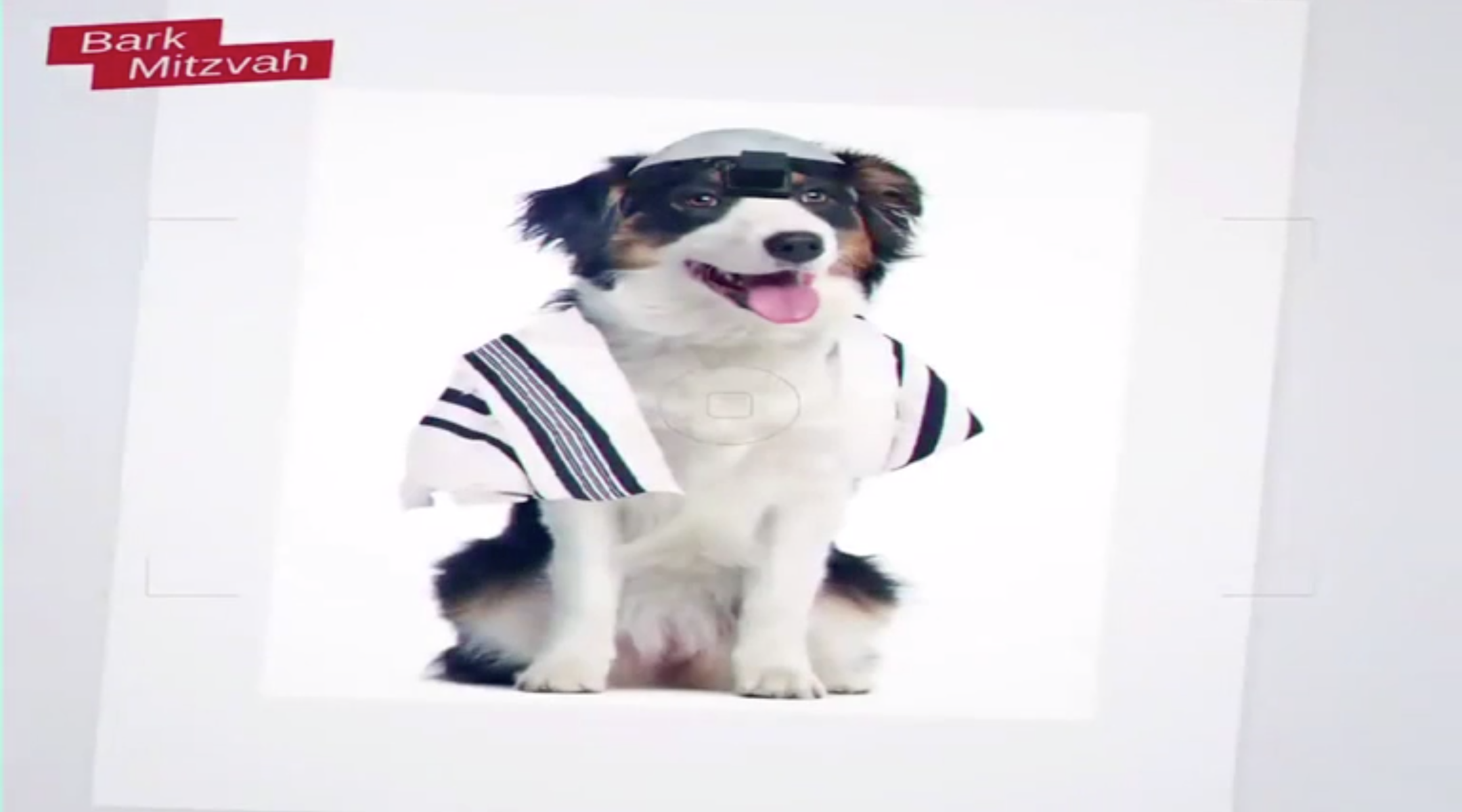 A frame from a United Torah Judaism ad that appeared to compare Reform Jewish converts to dogs. (Screen shot)
